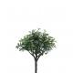 choix Buchenbusch, 26cm, vert